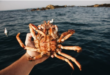 Why You Should eat King Crab